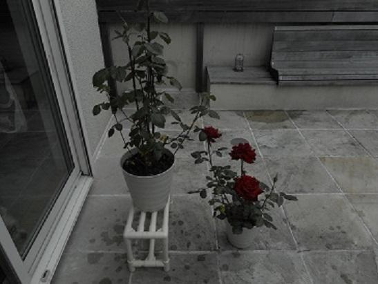 庭椅子 その2